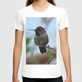 Juvenile Male Anna's Hummingbird T-shirt