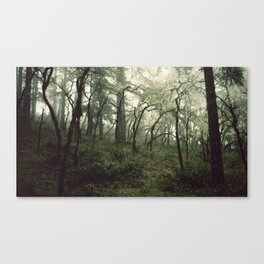 The frayed occupants of the Thetis Lake woods Canvas Print