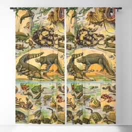 Reptiles Chart Nature Vintage Snake Turtle Alligator Blackout Curtain