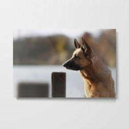 Working German Shepherd at a lake Metal Print