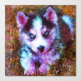 BABY WOLF HUSKY PUPPY CUB Canvas Print