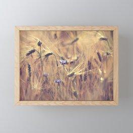 Corn flower Framed Mini Art Print