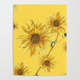 Sunflower Pattern 4 Poster