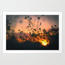 Poppy flowers shadows over sunset Art Print