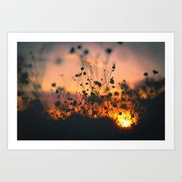 Poppy flowers shadows over sunset Art Print