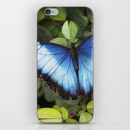Blue Morpho Butterfly iPhone Skin