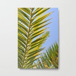 palm frond Metal Print