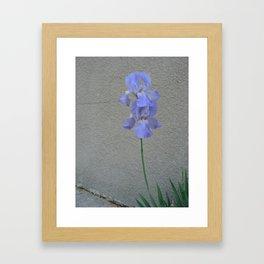 june iris 5 Framed Art Print