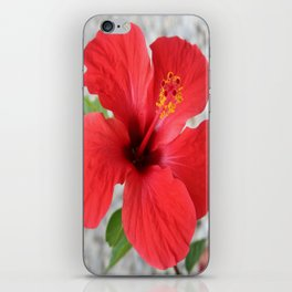 A Stunning Scarlet Hibiscus Tropical Flower iPhone Skin