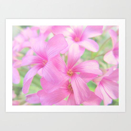 Coral Pink Petals Art Print