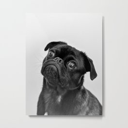 Pug Love II Metal Print
