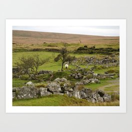 Sheep Amidst English Ruins Art Print