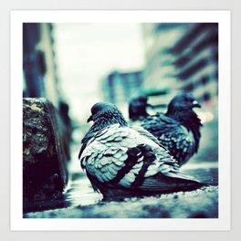 Pidgeons Of 6th Street Art Print