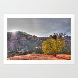 Red Rock Tree Art Print