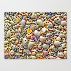Seashells on the Shore Canvas Print