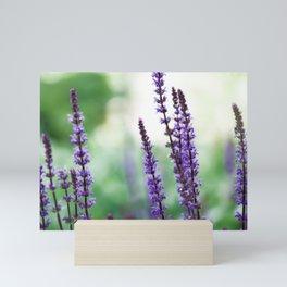 Salvia Flowers 4 Mini Art Print