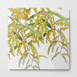 Australian Wattle Flower, Illustration Metal Print