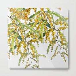 Australian Wattle Flower, Illustration Metal Print
