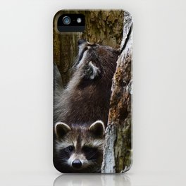 Young racoons at play iPhone Case