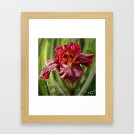 Stunning Red Iris Flower, Nature Print, Hand drawn original artwork Framed Art Print