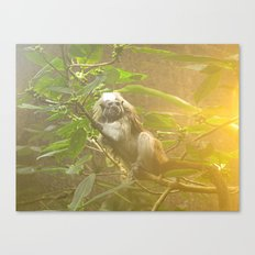 Monkey Canvas Print