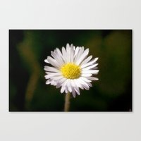 daisy Canvas Prints featuring Daisy by Lori Anne Photography