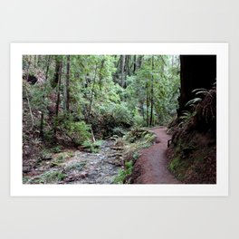 Redwood river Art Print