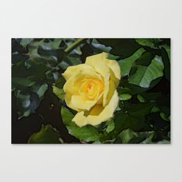 Chincoteague Yellow Canvas Print