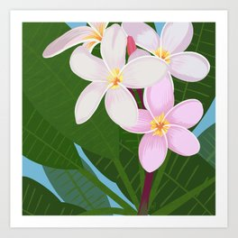 Key West - White Plumeria Art Print