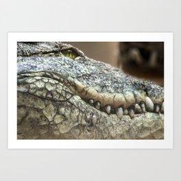 Wildlife Collection: Crocodile Art Print