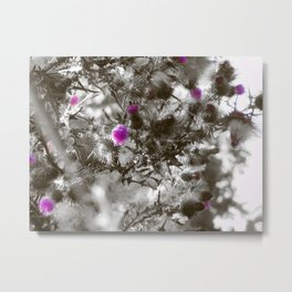 Milk Thistle Metal Print