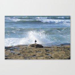 No Fear ~ Seagull Watching Waves ~ Sunset Cliffs, California Canvas Print