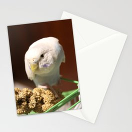 volo Stationery Cards