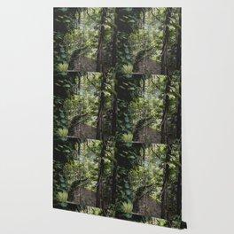 Hidden Jungle River Wallpaper