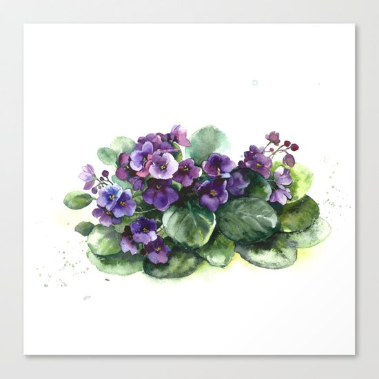 Senpolia viola violet flowers watercolor Canvas Print