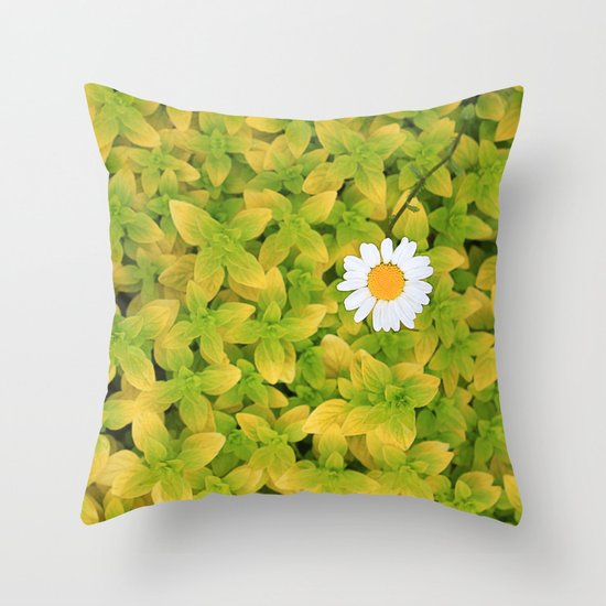 Daisy Flower Reaching For The Sun. Throw Pillow