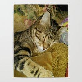 Zelda The Cat Poster