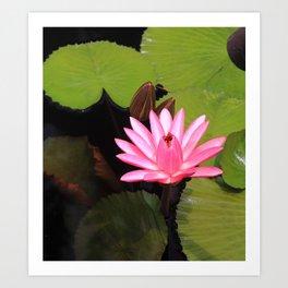 pink lily pad flower Art Print