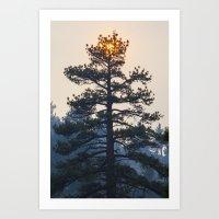 Suntree Art Print
