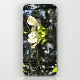 White Dogwood iPhone Skin