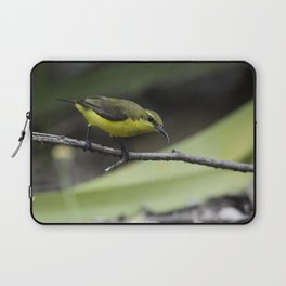 Olive-Backed Sunbird Laptop Sleeve
