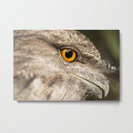 Tawny Frogmouth Metal Print