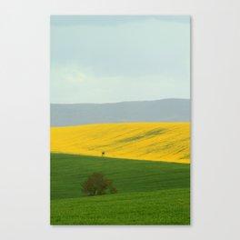 Colza 3 Canvas Print