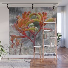 Orange Kangaroo Paw Flowers Wall Mural