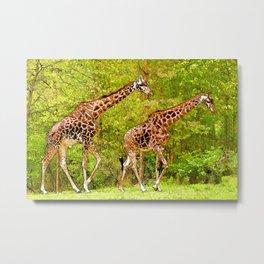 Wild Giraffes - African Wildlife Metal Print