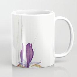 Iris Sibirica and Iris Orientalis from The Genus Iris (1913) by William Rickatson Dykes Coffee Mug