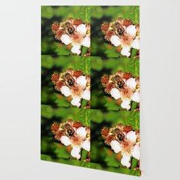 Honey Bee on a Blackberry flower Wallpaper