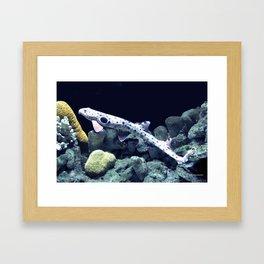 Epaulette Shark Framed Art Print