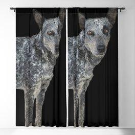 Australian Cattle Dog Blackout Curtain