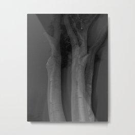 Old Beech Tree Metal Print